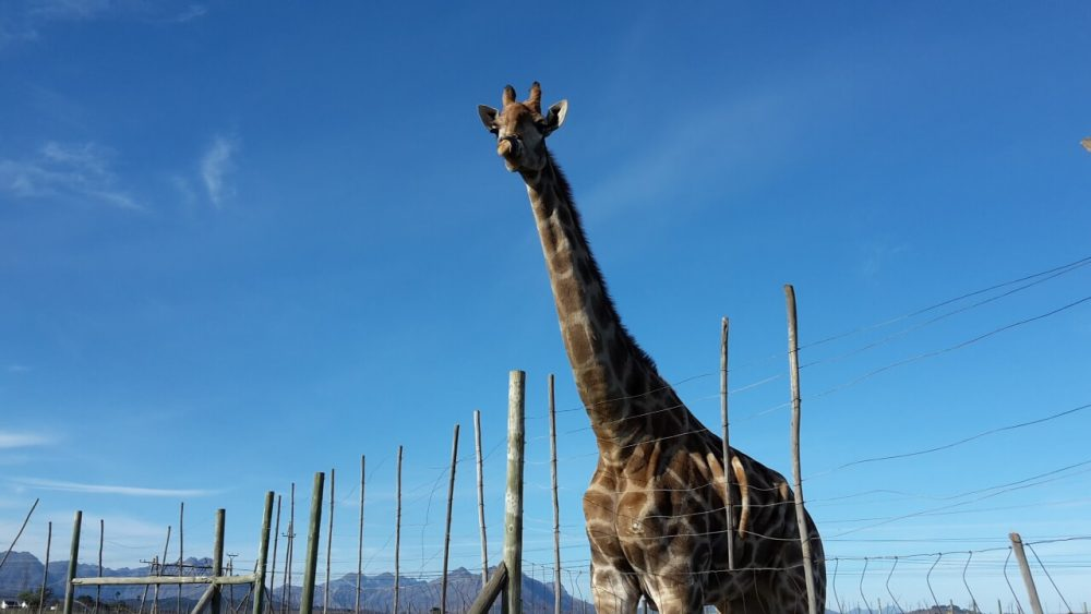 The ABC's Of Animal Activities In The Cape Winelands